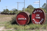 red Wine Barrels sculptures with an Avoca sign sit in the main street of a rural town