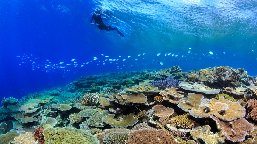 A diver swimming over colourful coral.