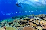 Underwater image of a diver swimming over coral reef