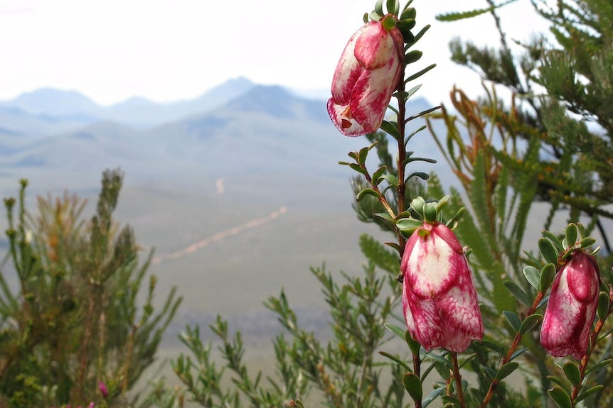 A flower with a mountain in the background