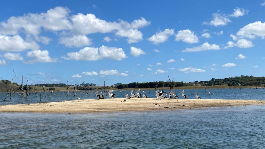 Pelicans sit on a sandy island in the middle of Tinaroo Dam.