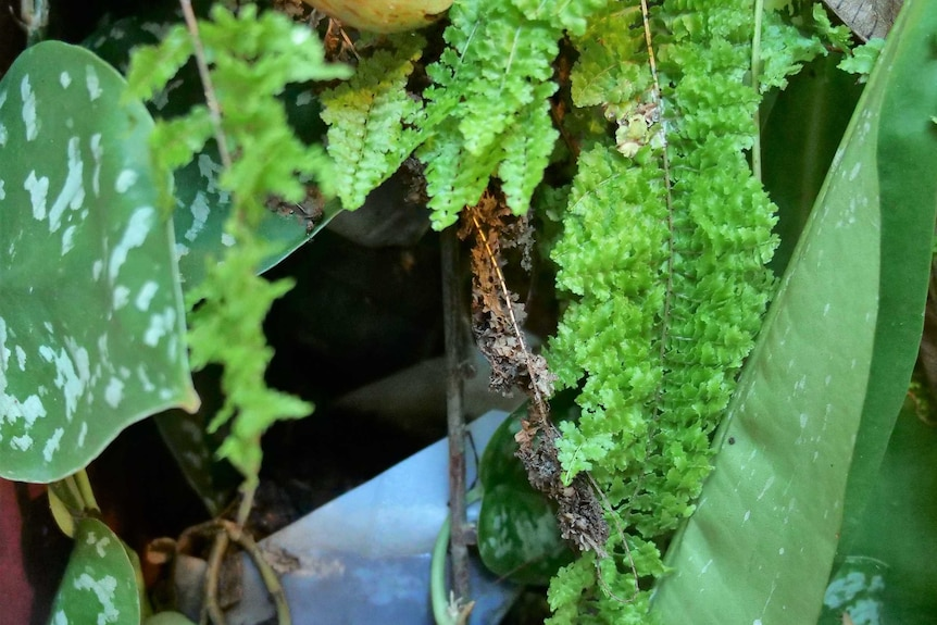 A peek into a lush foliage showing a hidden plastic milk bottle and some metal wire mesh.