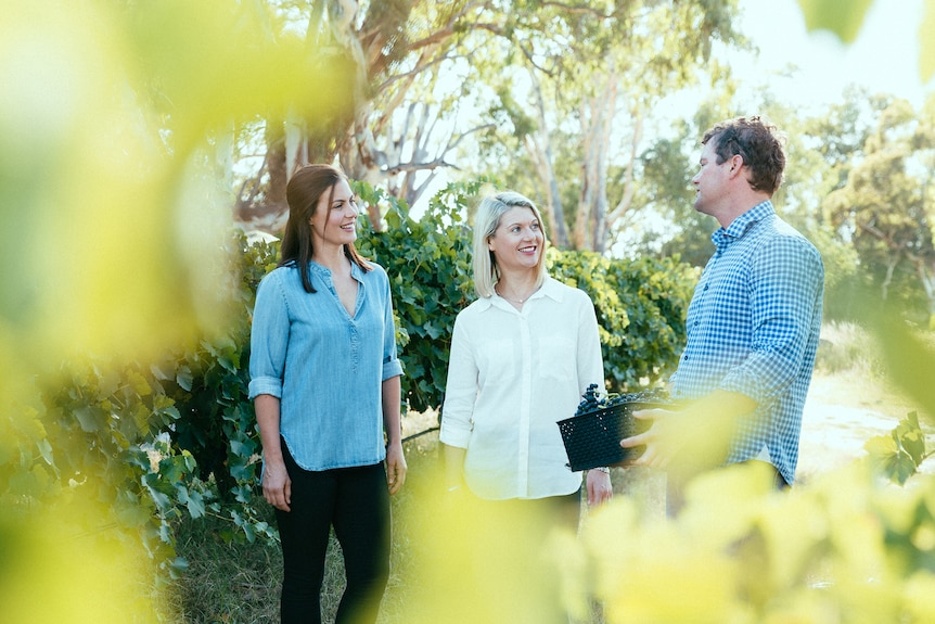 Three people standing in a vineyard talking to each other.