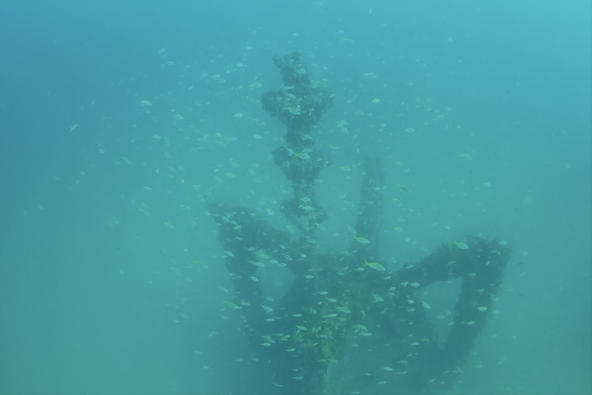 Fish swarm over a submerged object.
