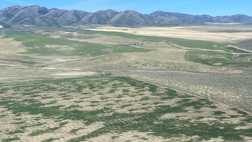Aerial shot of grain field in Idaho in the US.