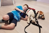 A young boy laying on the ground on top of a yellow labrador