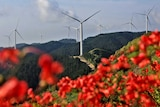 You look past a screen of bright red flowers in soft focus as wind turbines are pictured atop mountains on the horizon.