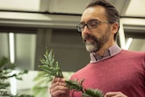 A man looks at a frond of Wollemi Pine in his hands.