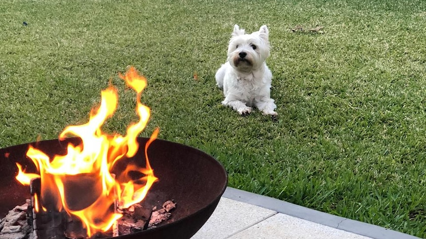 Fire Pits Might Be Trendy But May Not Be Legal To Use In Your Backyard Abc News