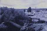 An archival image shows an uprooted tree in the Queanbeyan Riverside cemetery following the 1974 flood.