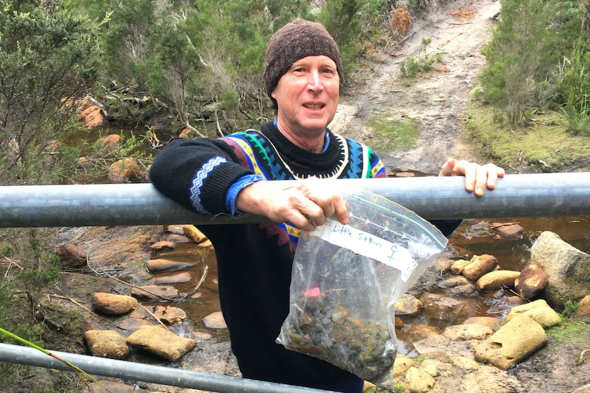 Dr David Pemberton collects devil scats for analysis.