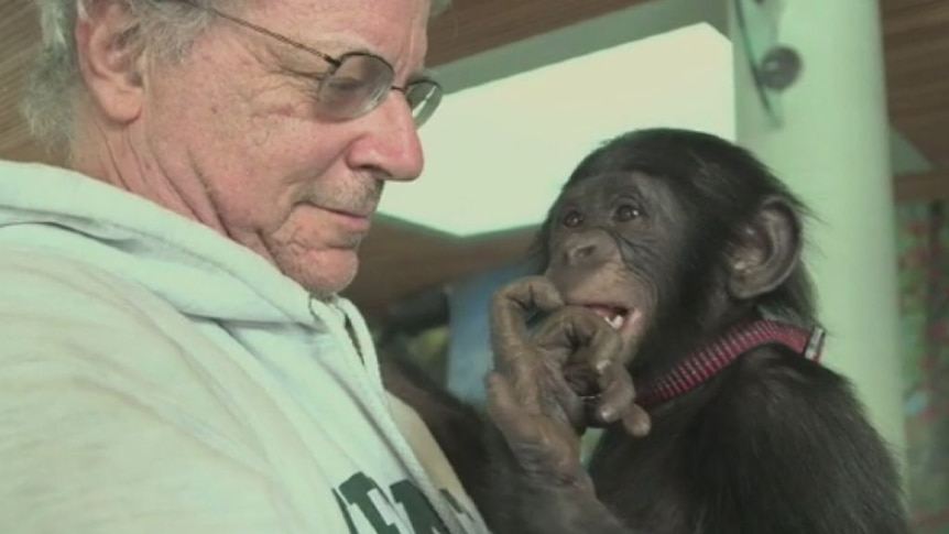 Does a chimpanzee deserve human rights?