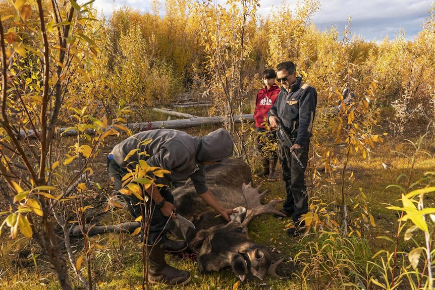 Two men with guns stand amongst yellow plants wielding guns over slain moose