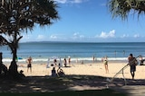 Beach scene on sunny day with pandanus palms at the side of the beach