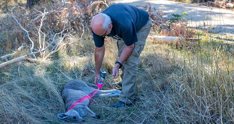 Marking the roo