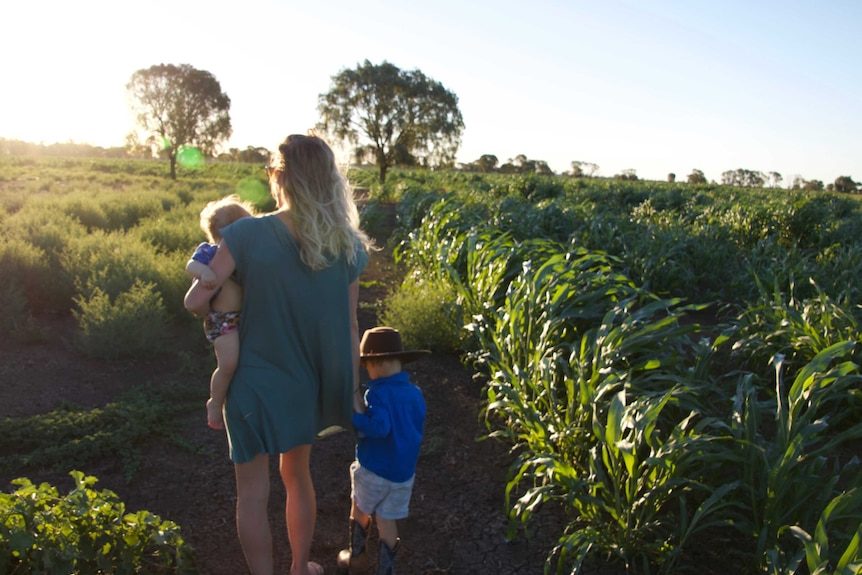Wide shot of a woman walking with two small children through a paddock towards the sunset.