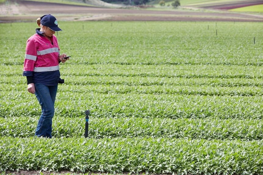 Microclimate sensing used by salad leaf supplier Houston's Farm in Southern Tasmania