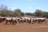 More innovation needed in pastoral regions where sheep are 'light snacks for the local dogs' says WA's new minister for agriculture.