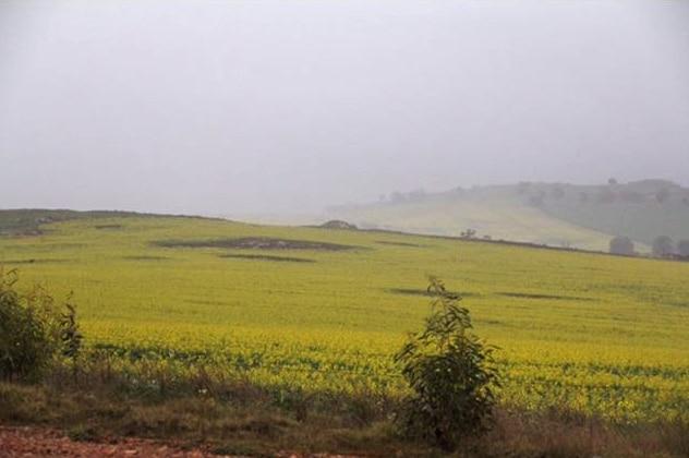 Rain drenches Wheatbelt