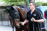Cox Plate favourite Winx is taken for a walk by strapper Umut Odemislioglu at Moonee Valley.