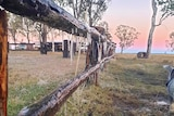 Icicles hang off a paddock fence in the outback.