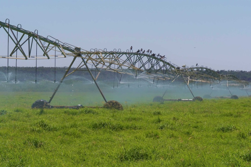 A large irrigation machine in a paddock
