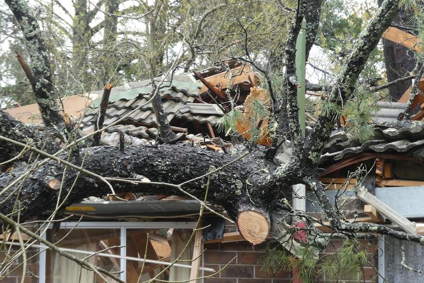 Close up of mangled roof under huge tree branch.
