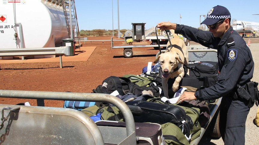 Police dog sniffs luggage in the Pilbara as part of drugs crackdown