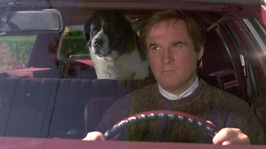 A man looks in his rear-view mirror while driving at a St Bernard dog