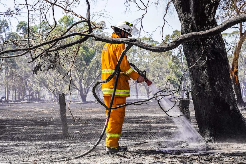 A firefighter with a fire hose sprays a smouldering tree stump.
