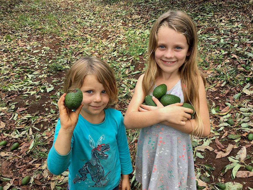 Young boy and girl hold damaged avocados.