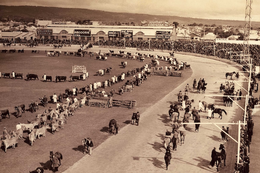 Large crowds attend the Royal Adelaide Show in 1936
