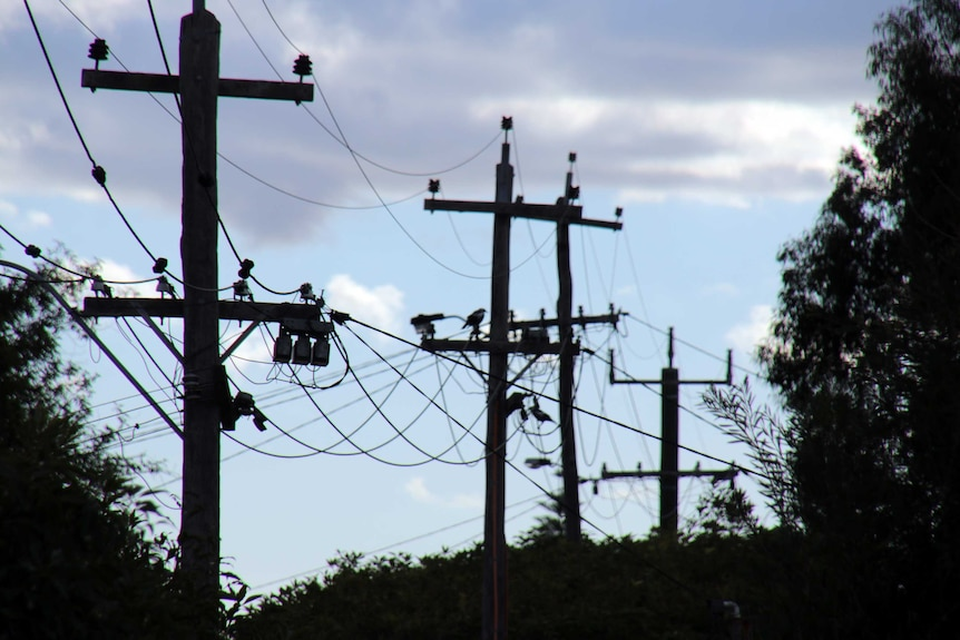 Above ground power lines run along timber poles. Birds sit on the wires.