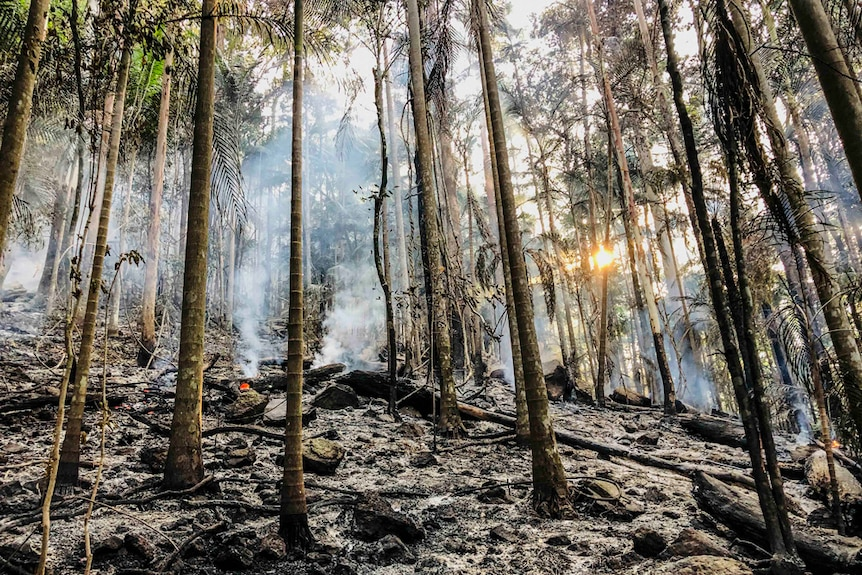 A rainforest at sunrise with burnt palm trees, ash on the forest floor and smouldering logs.