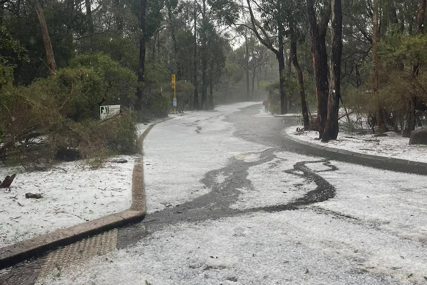Hail on a road among trees
