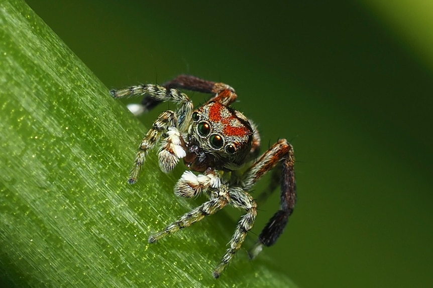 Close up photo of small spider