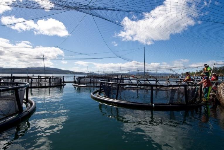 Huon Aquaculture salmon pens in southern Tasmania.