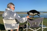 a large bird sits atop a camping chair, touching the outstretched hand of a camper sitting beside it