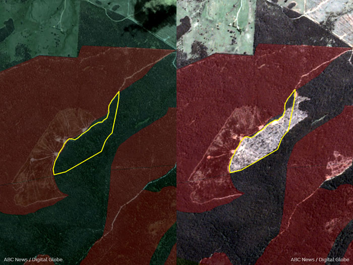 Before and after satellite images showing logging at the Squirrel's Paw coupe in East Gippsland