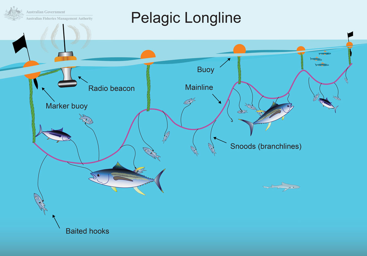 A drawing showing how the longlining method works.