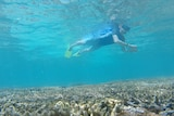 A 'citizen scientist' exploring the Great Barrier Reef