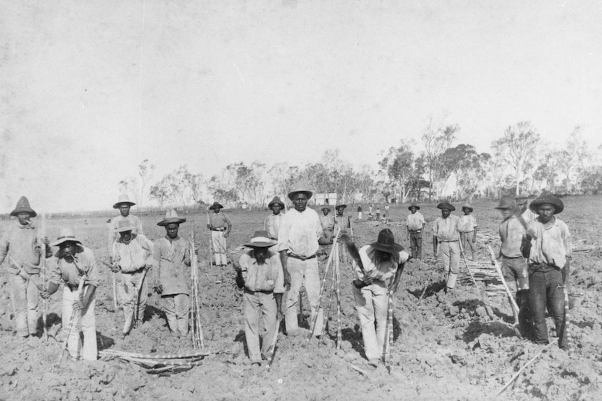 South Sea Islanders planting sugar cane at Ayr, Queensland. Circa 1890. They are wearing shirts, pants and hats.