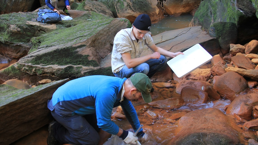 A group of three researchers testing and measuring water pollution in the Wingecarribee river.