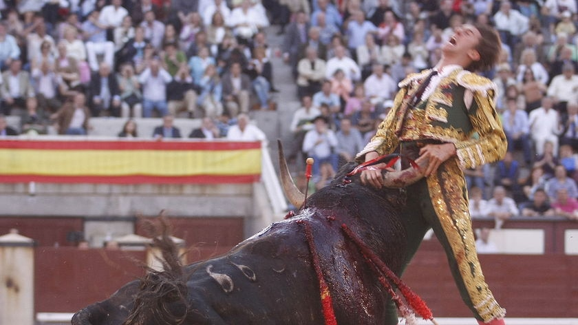 Spanish matador Israel Lancho is gored by a bull in Madrid on May 27, 2009
