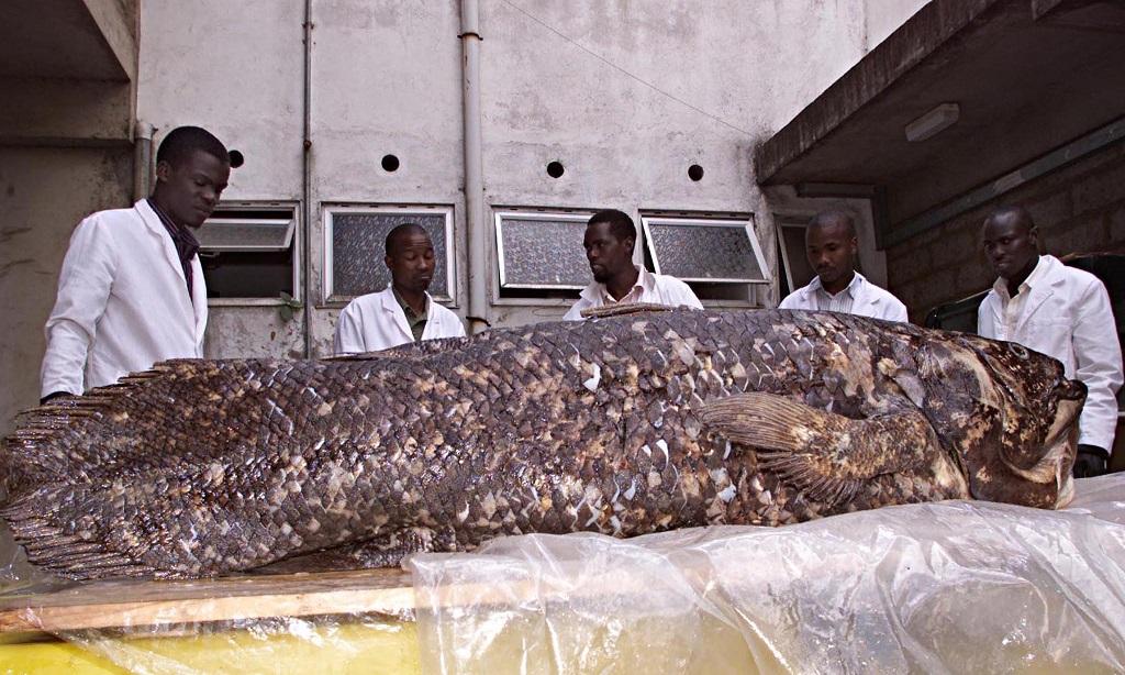 Staff of department of Fish Studies at the National Museum of Kenya display aCoelacanthfish.