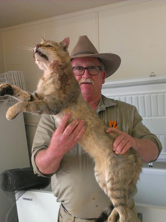 Arid Recovery Field and Maintenance Officer John Crompton holding a large feral cat.