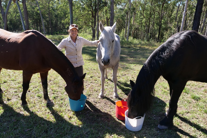 A man stands between three horses in a paddock.