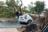 A fallen tree crushes a car in Wembley