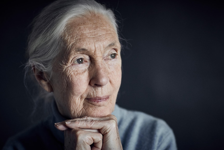 A close-up portrait of Jane Goodall looking into the distance.
