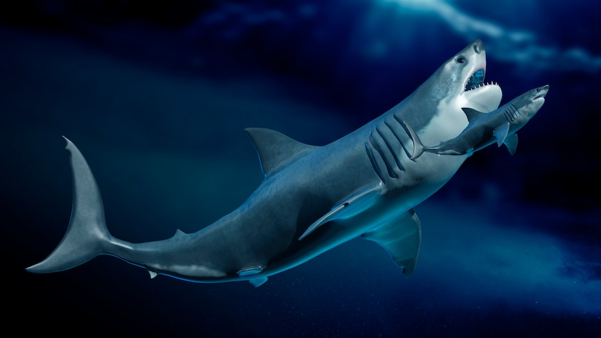 Sharks were nearly completely wiped out 19 million years ago – ABC News